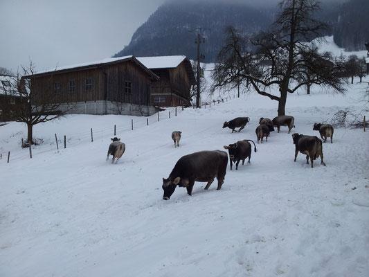 ...auch im Schnee ist's draussen schön!