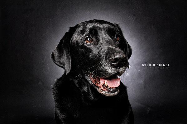 Studio-Seikel / Hunde mit Charakter / Kunst-Projekt / Werbefotografie / Hundefotos / Tierfotografie / Hundefotografie
