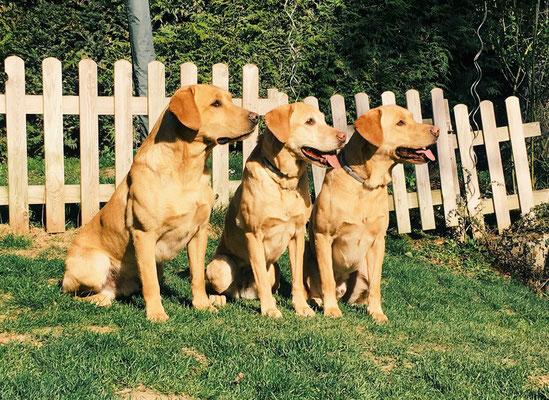 Franz, Peaches und Iro