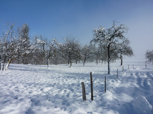 Streuobstwiese Winter