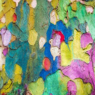 """Natur trifft Farbe, Annahme d-pixx-Fotograf 2/2019 Thema """"Farben und Formen"""""""