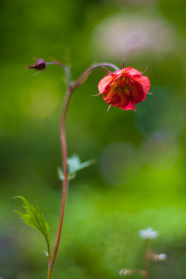 """Dem Licht entgegen, Lobende Erwähnung fotoforum Award 4/2015 Pflanzen, Kategorie """"In Park und Garten"""""""