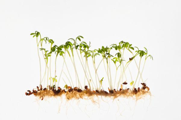 "Küchengarten, Annahme fotoforum Award 4/2017 Pflanzen und Pilze, Kategorie ""Nutzpflanzen""; Annahme d-pixx-Fotograf 1/2018 Freies Thema, Heftveröffentlichung"