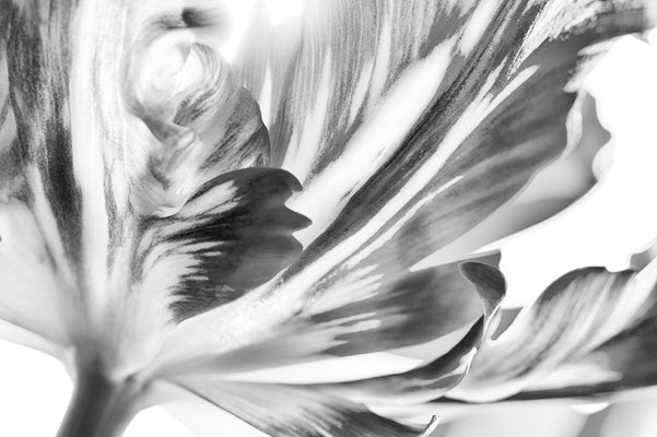 """Extrovertierte Schönheit in S/W, Lobende Erwähnung fotoforum Award 4/2016 Pflanzen und Pilze, Kategorie """"Die Natur als Künstlerin"""""""