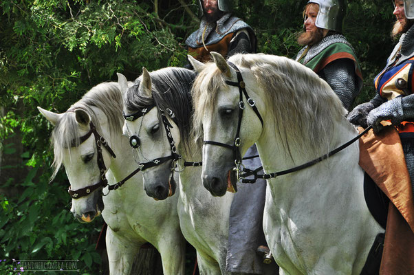 Knights on White Horses