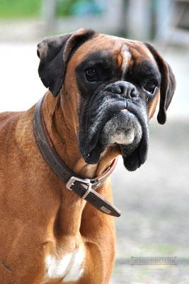 Arco (Boxer)