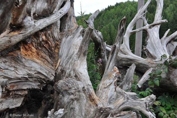 Schwäbischer Wald