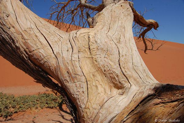 Namibia Düne 45