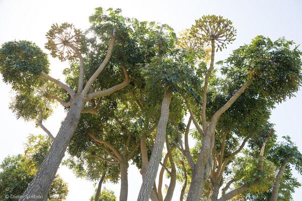 Kapstadt Kirstenbosch-Botanical-Garden