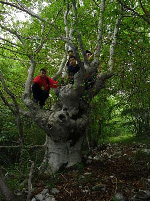 un albero centenario che ha visto passare circa 400.000 pellegrini ogni anno