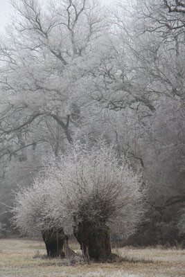 Winter auf dem Rohrlach