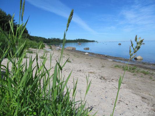 Einsamer Strand im Lahemaa Nat. Park...