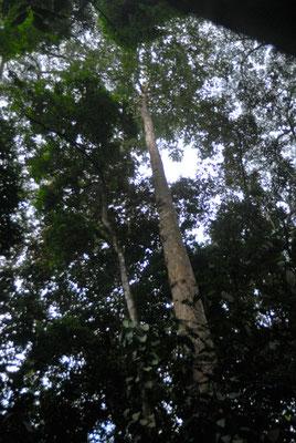 Forêt sur une piste menant à Nzérékoré en Guinée forestière © Michel Aymerich