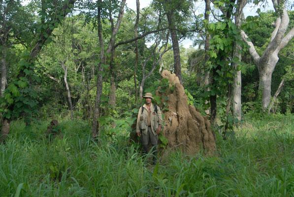 A côté d'une termitière plus haute que moi. Haute Guinée 2012 @Michel AYMERICH