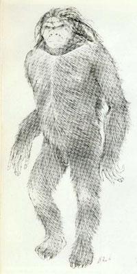 """""""Tous les témoins ont désigné l'homme pongoïde, c'est-à-dire le dessin effectué par Alika Lindbergh"""""""