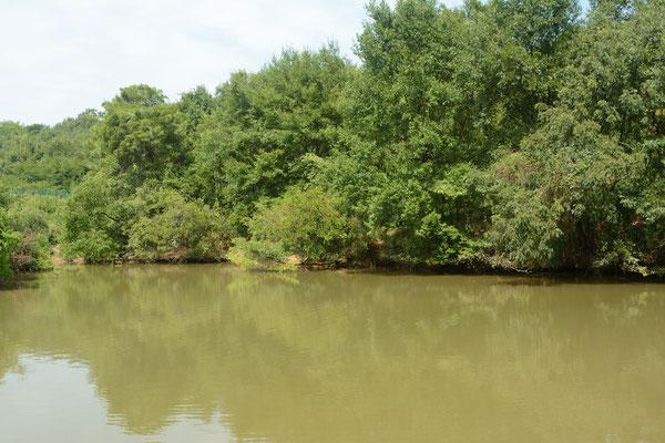 Biotope à Alligator de Chine (Alligator sinensis). Province de ANHUI  ©Michel AYMERICH