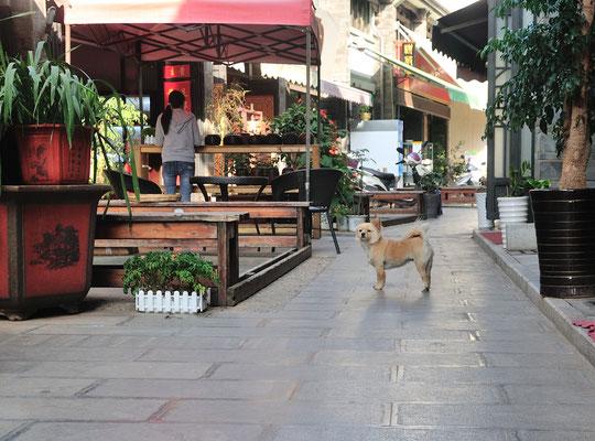 Les chiens sont partout et partout tolérés! A Kunming (Yunnan), Chine 2017 ©AYMERICH Michel