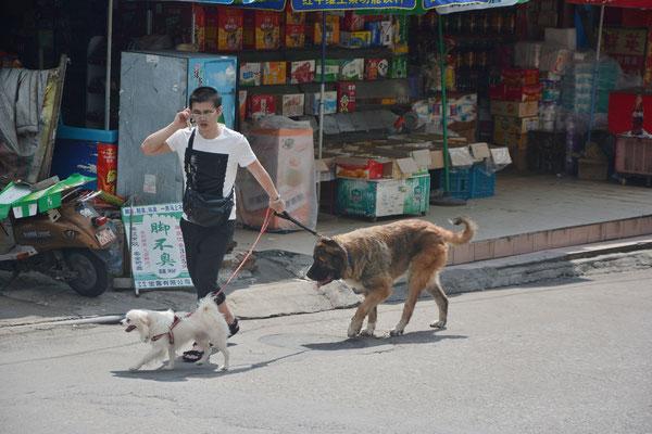 Homme avec ses chiens à  Liuzhou  (région autonome Zhuang du Guangxi) ©Michel AYMERICH