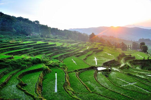Près de Yuanyang (Yunnan), Chine 2017 ©AYMERICH Michel