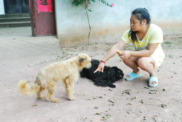 Les chiens de compagnie ne sont pas rares en Chine... Ici à Lu'an (ANHUI) ©Michel AYMERICH