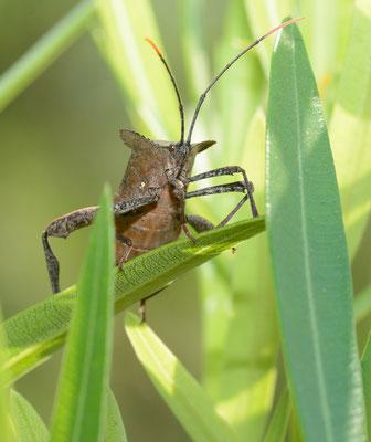 Espèce encore indéterminée d'insecte. Wuyishan (FUJIAN)  ©Michel AYMERICH