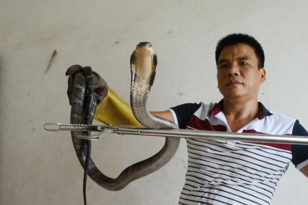 Avec un cobra royal (Ophiophagus hannah). Près de Liuzhou (GUANGXI) ©Michel AYMERICH