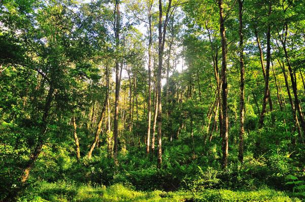 Forêt près de Yuanyang (Yunnan), Chine 2017 ©AYMERICH Michel