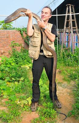 """Avec un cobra royal """"apprivoisé"""".  Sud de Nanning. Province du Guangxi, Chine 2017 ©AYMERICH Michel"""