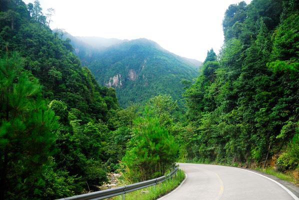 Réserve naturelle de Mangshan près de Chenzhou (HUNAN) ©Michel AYMERICH