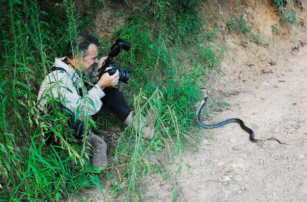 Je photographie un cobra de Chine (Naja atra) ©Zhang WEI/Michel AYMERICH