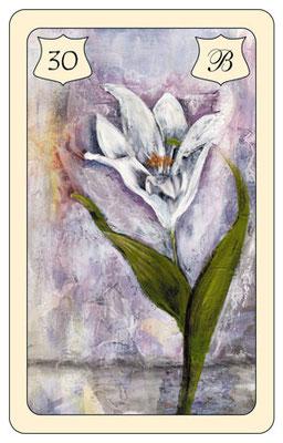 Innere Aufmerksamkeit im positiven oder negativen Sinn. Die Lilie verweist auch auf Sinnlichkeit!
