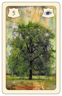 Nr. 5 Baum -Leben, Wurzeln, Familie, Abstammung, Stabilität, Familiär  (Zukunftskarte + Zeitkarte)