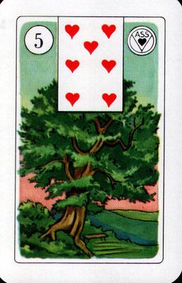 NrNr. 5 Baum -Leben, Wurzeln, Familie, Abstammung, Stabilität, Familiär (Zukunftskarte + Zeitkart