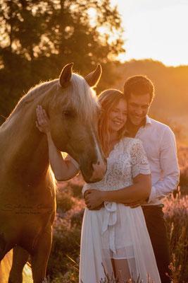 Pferd mit Paar