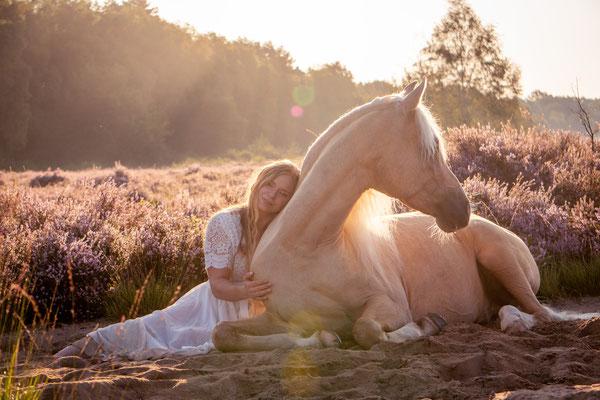 liegendes Pferd
