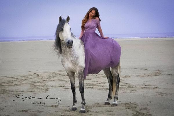spanische pferd foto