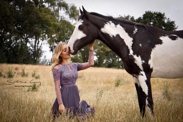 overo Pferd