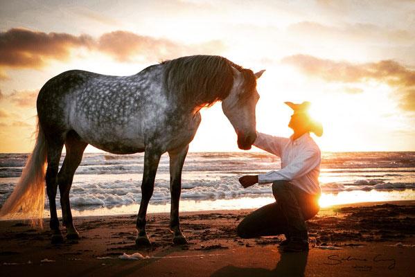 Spanisches Pferd Sonnenuntergang