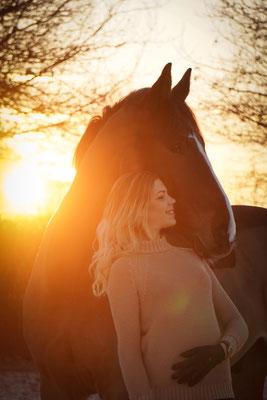 Pferd Sonnenaufgang
