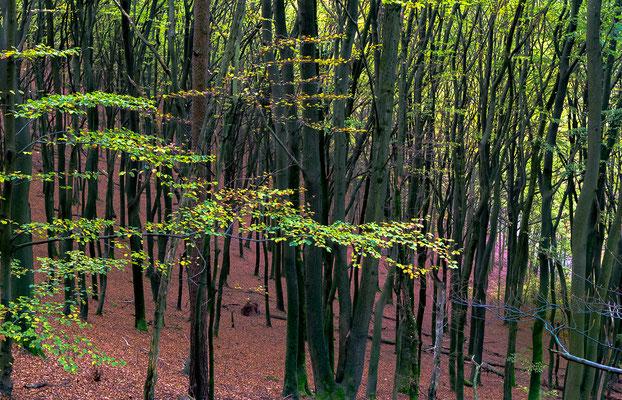 Verwirrender Wald  in die  Richtung Runder Hut