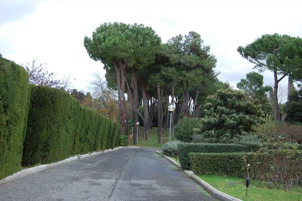 Viale che porta al parco