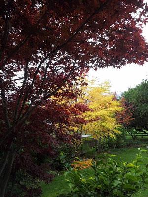 Herbsteinzug in unserem Garten
