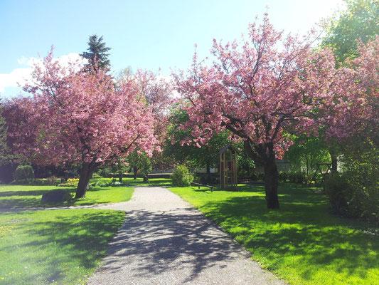 Park in Reutte