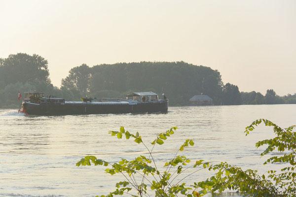 Im Hintergrund eine alte Bekannte, die Schiffsmühle Ginsheim  © Harald H. 20.07.2021 06:59