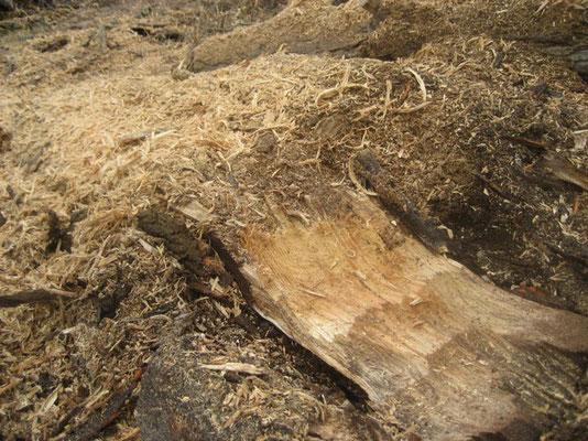 Hydraulische Anbaufräse für Bagger - SEPPI M. KASTOR hyd