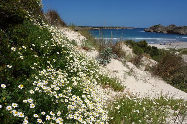 Floraison printanière ( côte sud de Minorque)