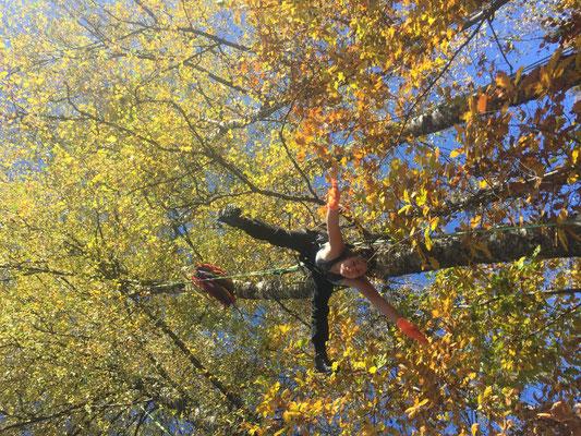 Yoga im Baum