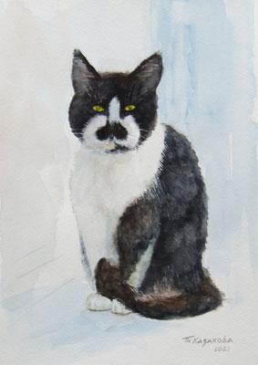 Татьяна Казакова. Очень серьёзный кот
