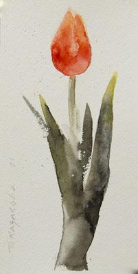 Татьяна Казакова. Тюльпан
