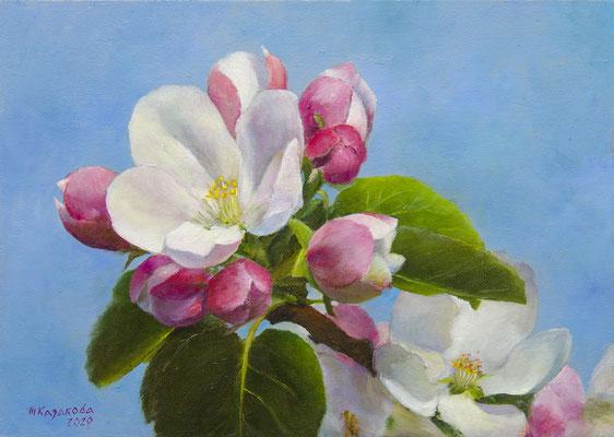 Татьяна Казакова. Цветущая яблоня